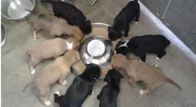 Adoptováni 00dd004297